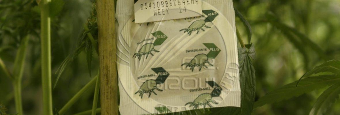 Biocontrolcannabis